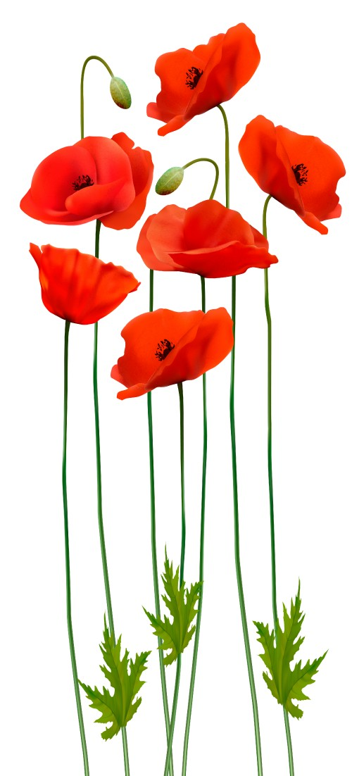 beauty_background_with_red_poppies.jpg