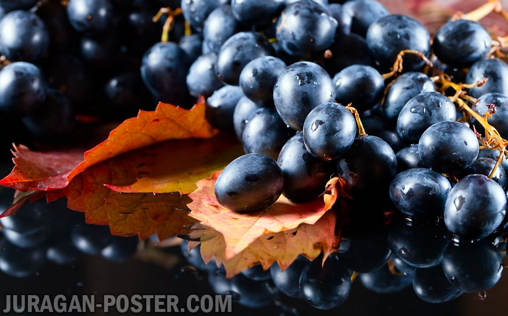 Collection Of Wine Grapes Autumn Jual Poster Di Juragan Poster