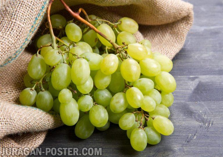 jual poster gambar buah anggur