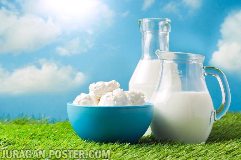 jual poster gambar minuman susu