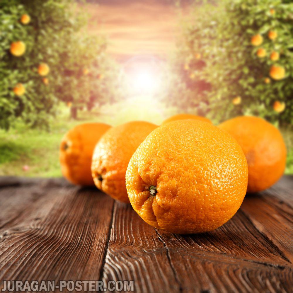 jual poster gambar buah Oranges / Jeruk