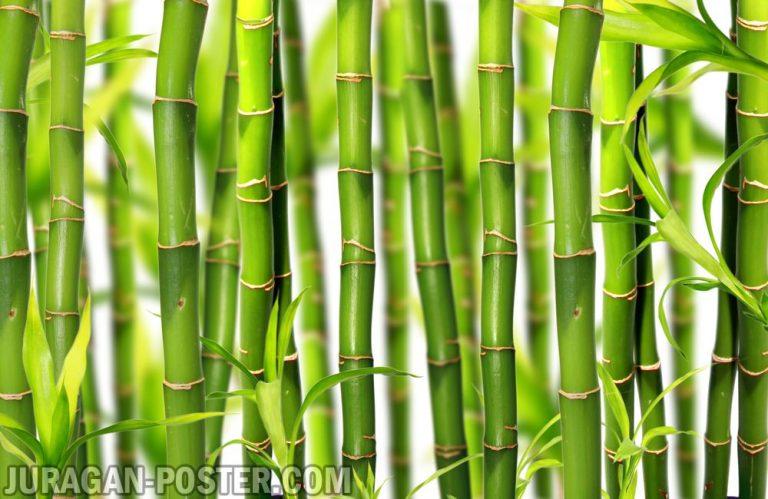 bamboo_nature_019