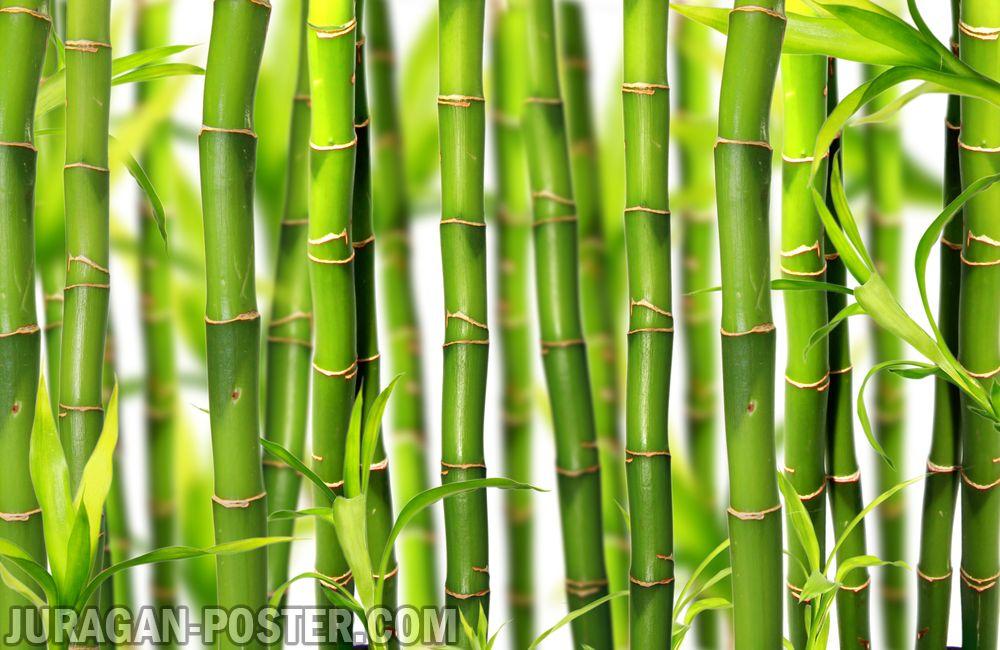 Jual poster gambar pemandangan alam bambu