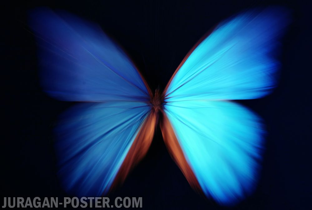 jual poster gambar kupu-kupu