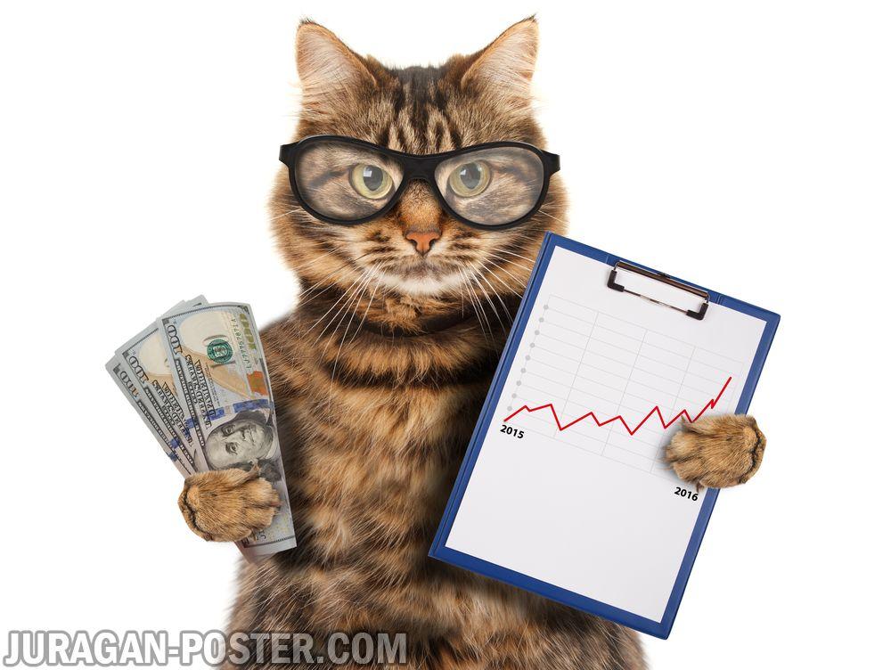 jual poster gambar kucing 01