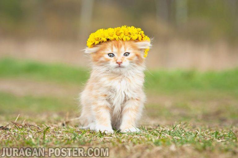 jual poster gambar kucing 02