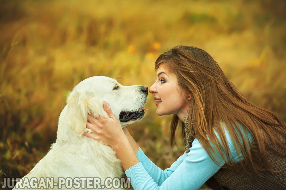 jual poster gambar anjing 03