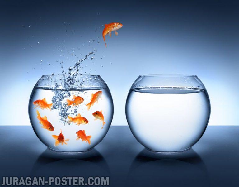 jual poster gambar ikan