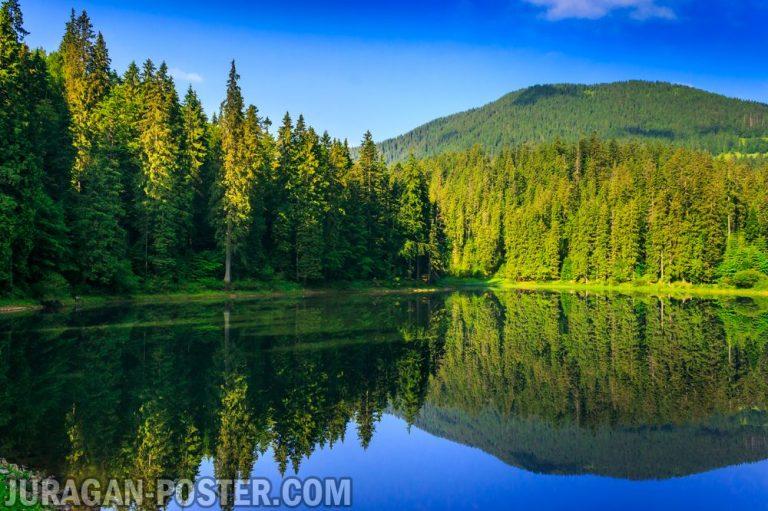 jual poster gambar pemandangan alam hutan forest 02