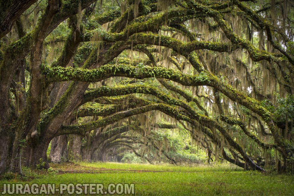 jual poster gambar pemandangan alam hutan forest 03