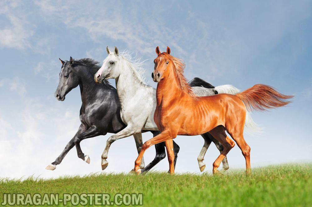 Jual poster gambar kuda