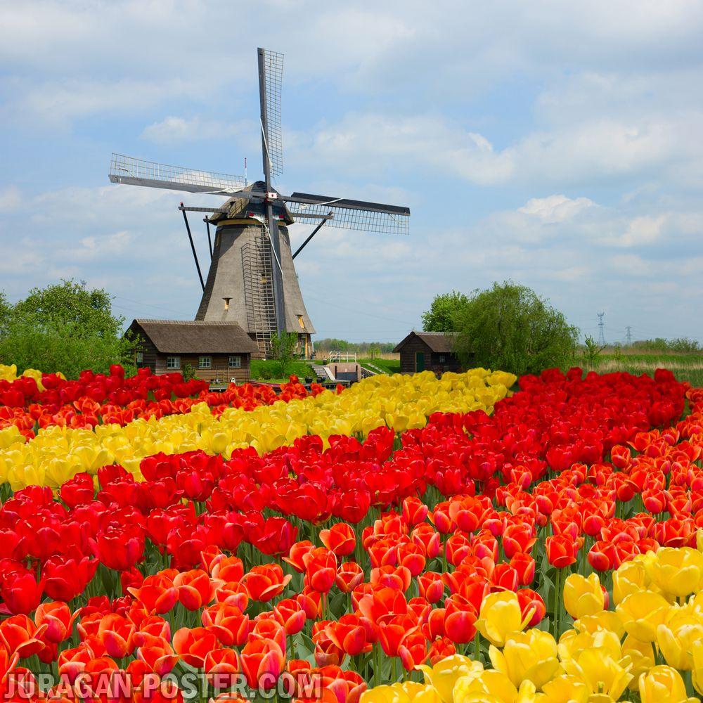 jual poster gambar pemandangan alam musim semi spring