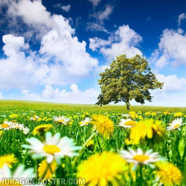 jual poster gambar pemandangan alam musim panas summer 01