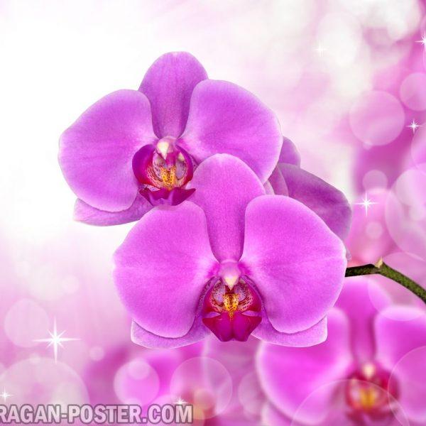 Jual poster gambar bunga anggrek orchid