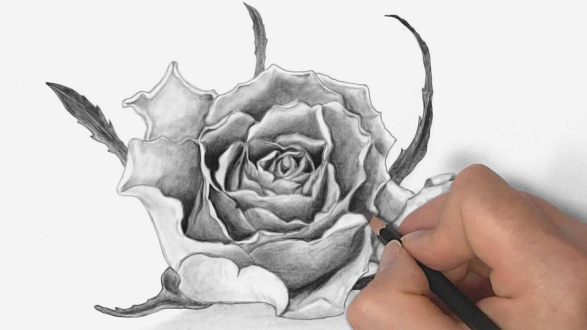 Gambar Bunga 3d Dengan Pensil GAMBAR BUNGA
