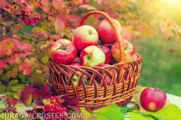 jual poster gambar buah Apple