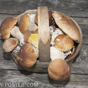 jual poster gambar Mushroom / Jamur