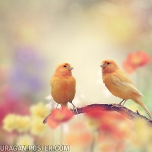 Jual poster gambar burung