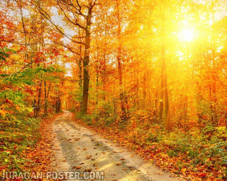 Jual poster gambar pemandangan musim gugur autumn 03