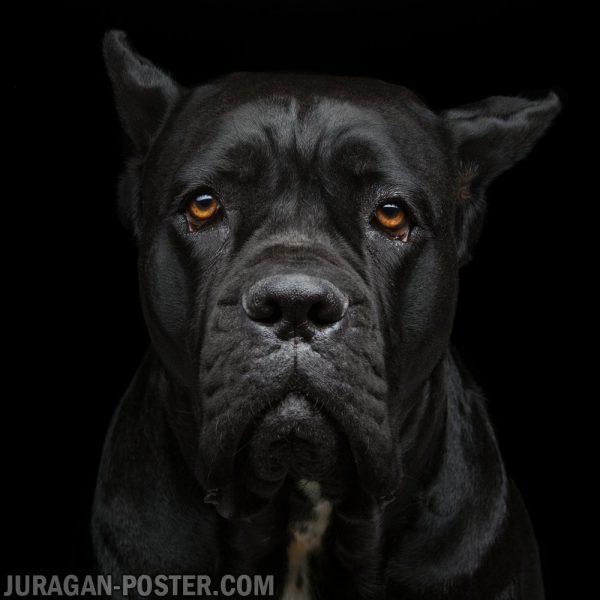 jual poster gambar anjing 01