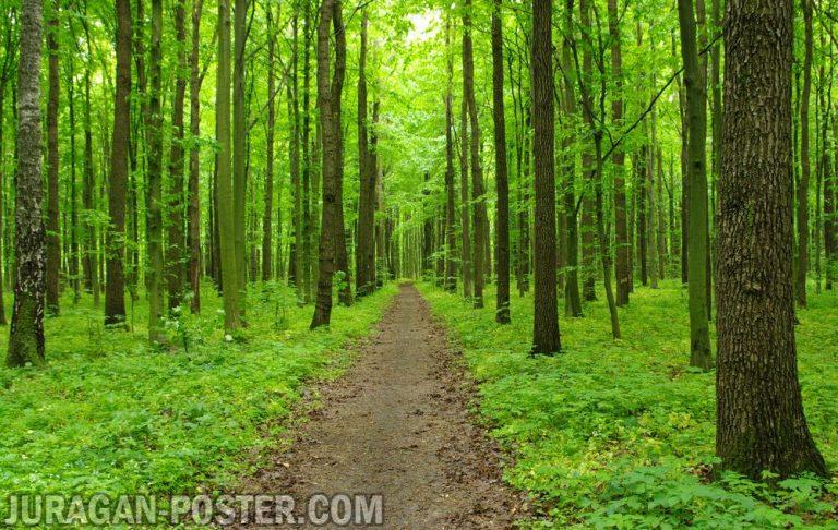 jual poster gambar pemandangan alam hutan forest 01