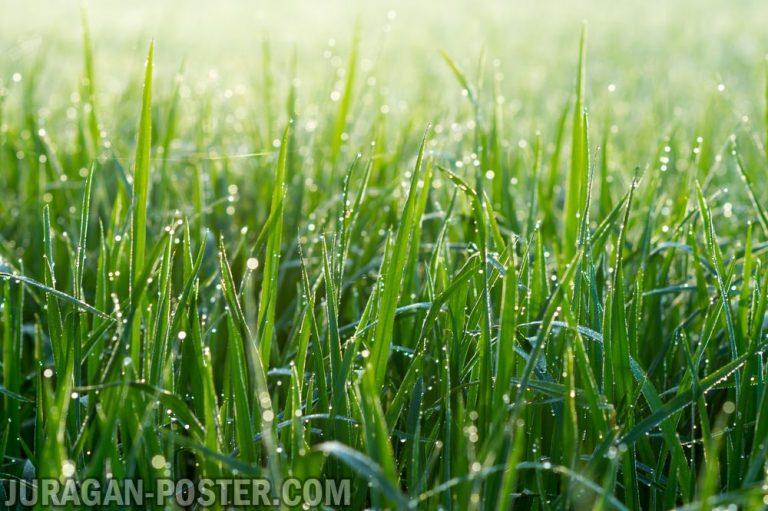 Jual poster gambar pemandangan alam rumput dan daun hijau green grass