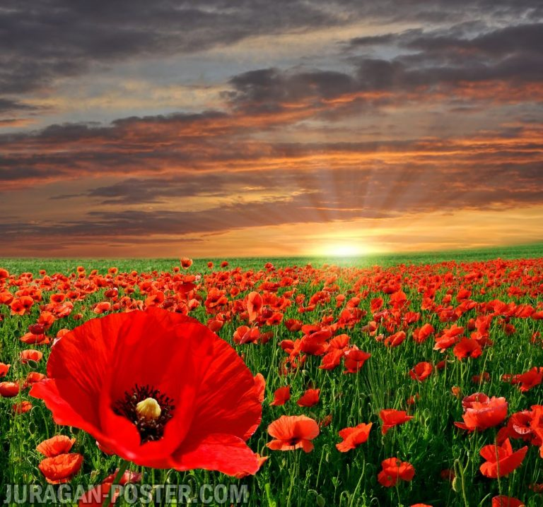 jual poster gambar pemandangan alam matahari terbit sunrise 01
