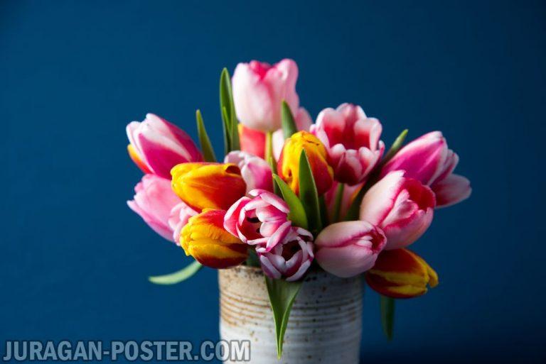 Jual poster gambar bunga Tulip 01